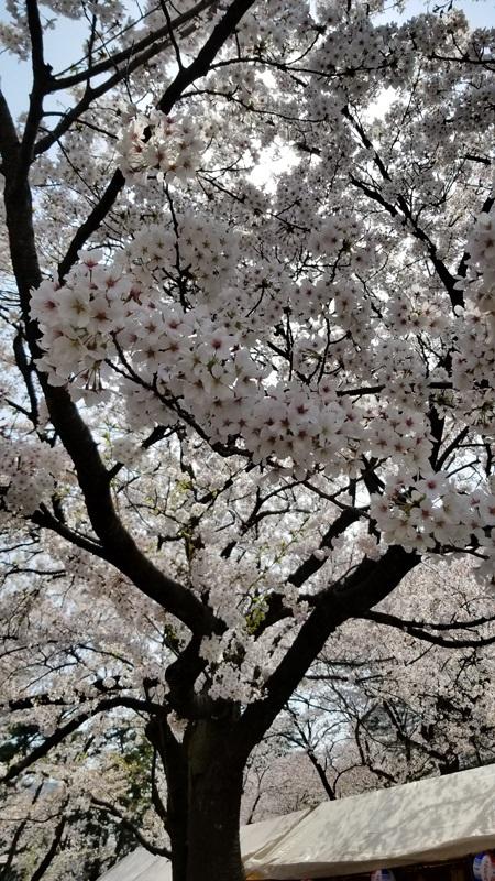 Sakurao_56